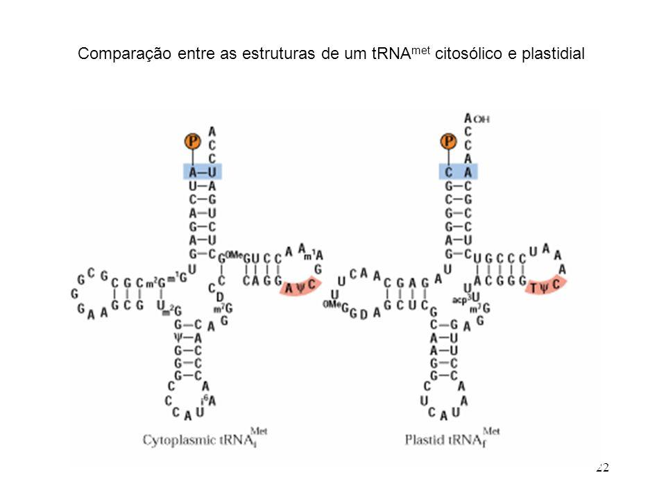22 Comparação entre as estruturas de um tRNA met citosólico e plastidial