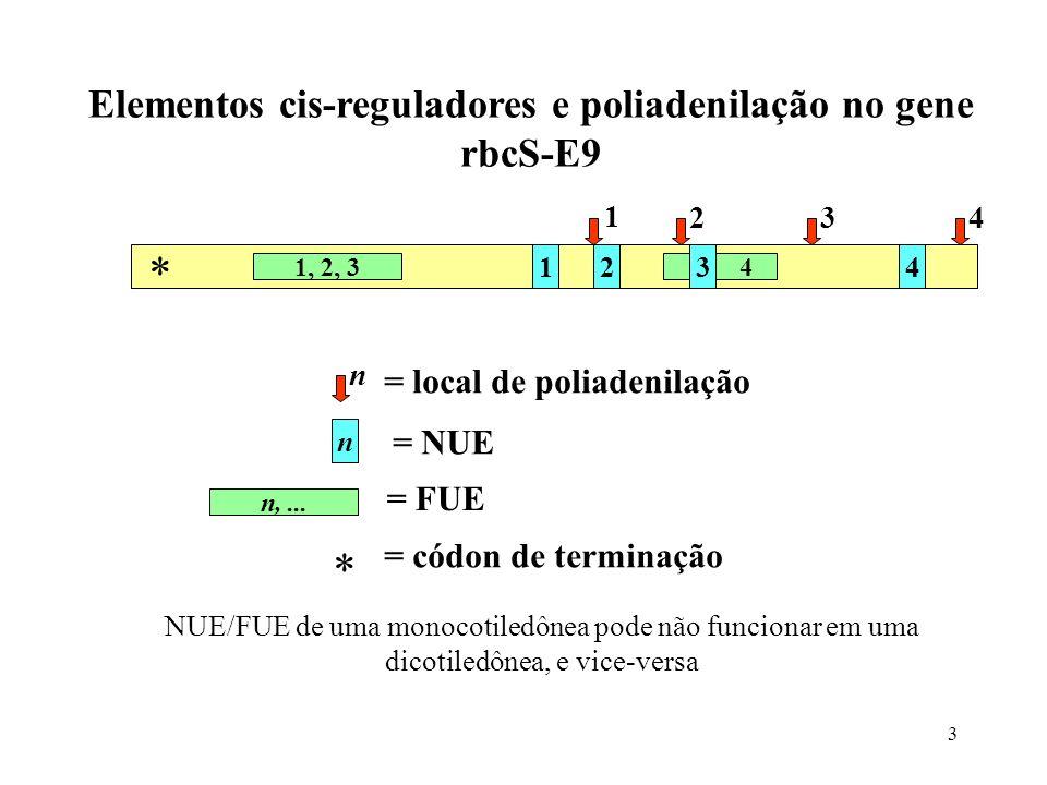 3 Elementos cis-reguladores e poliadenilação no gene rbcS-E9 1234 1, 2, 34 1 234 * n n n,... = local de poliadenilação = NUE = FUE * = códon de termin