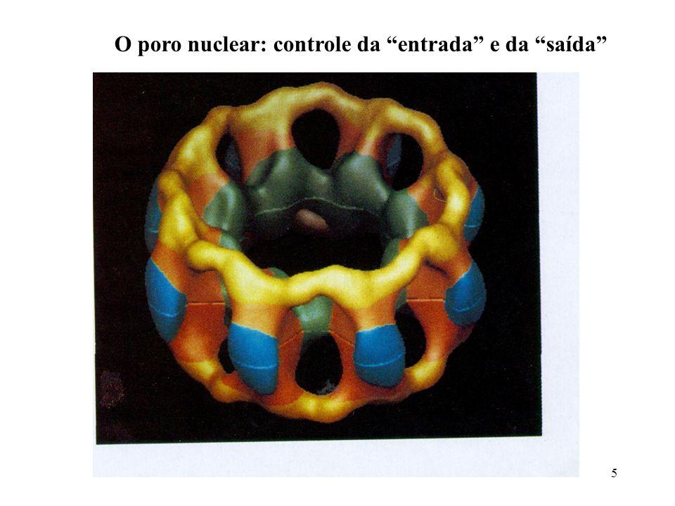 5 O poro nuclear: controle da entrada e da saída