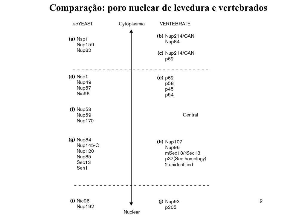 9 Comparação: poro nuclear de levedura e vertebrados