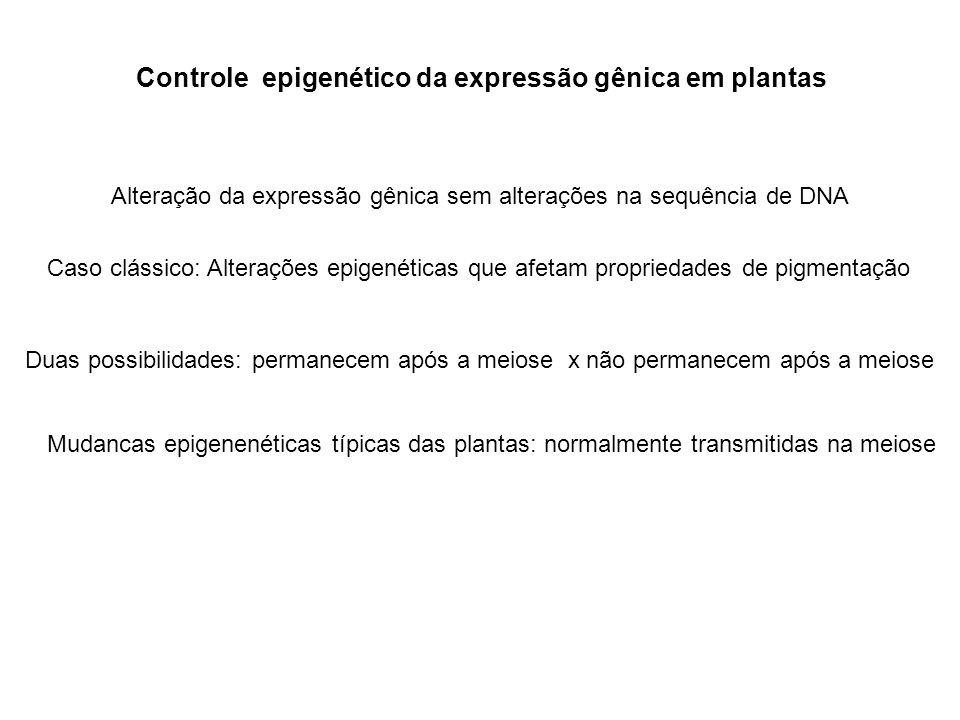 Controle epigenético da expressão gênica em plantas Alteração da expressão gênica sem alterações na sequência de DNA Caso clássico: Alterações epigené