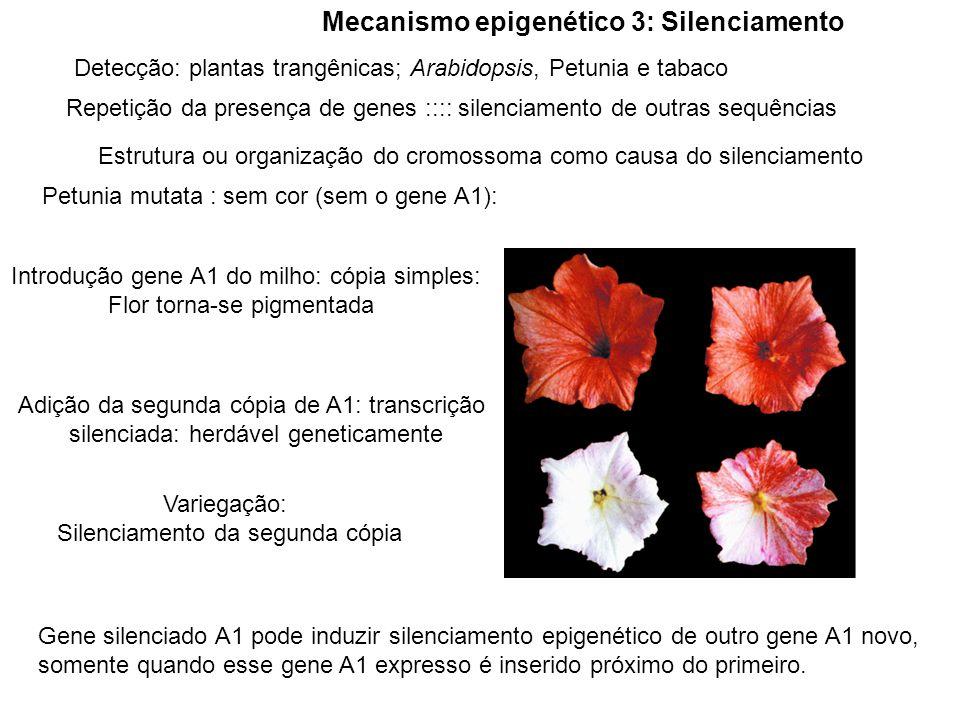 Mecanismo epigenético 3: Silenciamento Detecção: plantas trangênicas; Arabidopsis, Petunia e tabaco Repetição da presença de genes :::: silenciamento