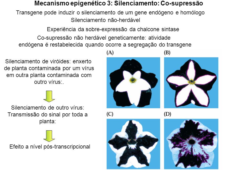 Mecanismo epigenético 3: Silenciamento: Co-supressão Transgene pode induzir o silenciamento de um gene endógeno e homólogo Experiência da sobre-expres