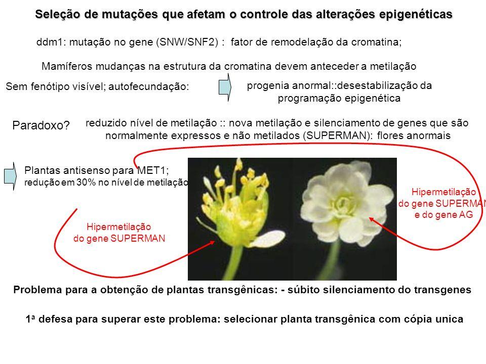 Seleção de mutações que afetam o controle das alterações epigenéticas ddm1: mutação no gene (SNW/SNF2) : fator de remodelação da cromatina; Mamíferos
