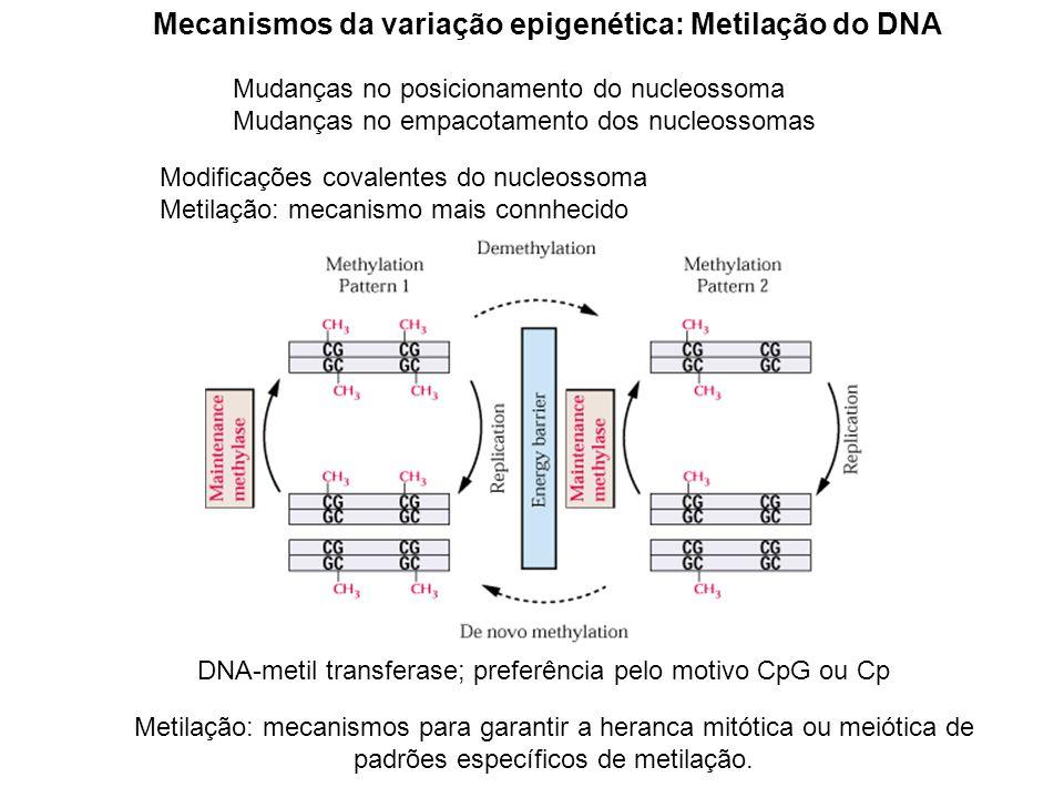 Mecanismos da variação epigenética: Metilação do DNA Mudanças no posicionamento do nucleossoma Mudanças no empacotamento dos nucleossomas Metilação: m