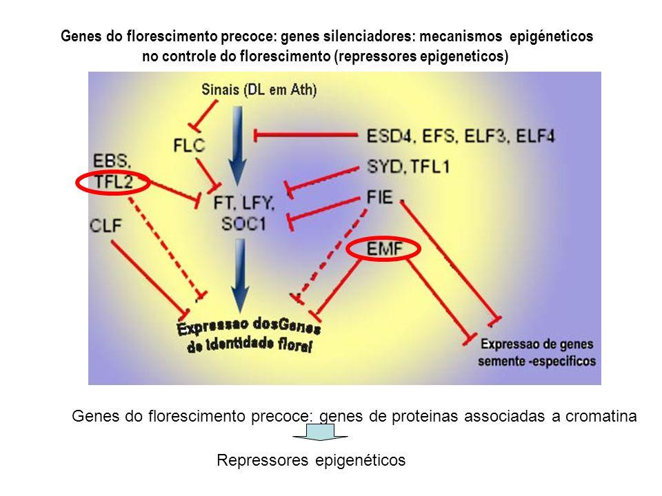 Genes do florescimento precoce: genes silenciadores: mecanismos epigéneticos no controle do florescimento (repressores epigeneticos) Genes do floresci