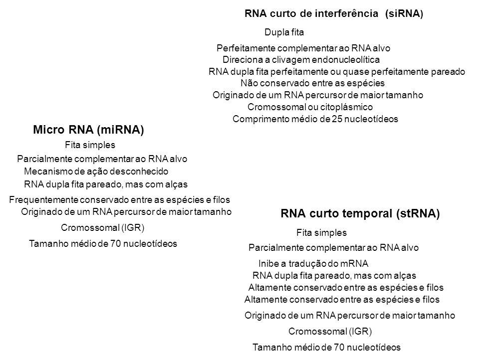 Comprimento médio de 25 nucleotídeos Tamanho médio de 70 nucleotídeos Dupla fita Fita simples Perfeitamente complementar ao RNA alvo Parcialmente comp