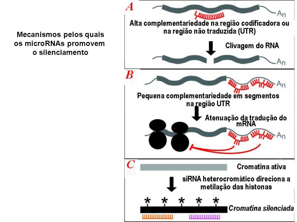 Mecanismos pelos quais os microRNAs promovem o silenciamento