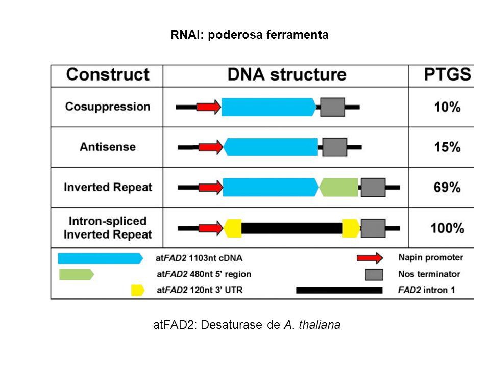 RNAi: poderosa ferramenta atFAD2: Desaturase de A. thaliana
