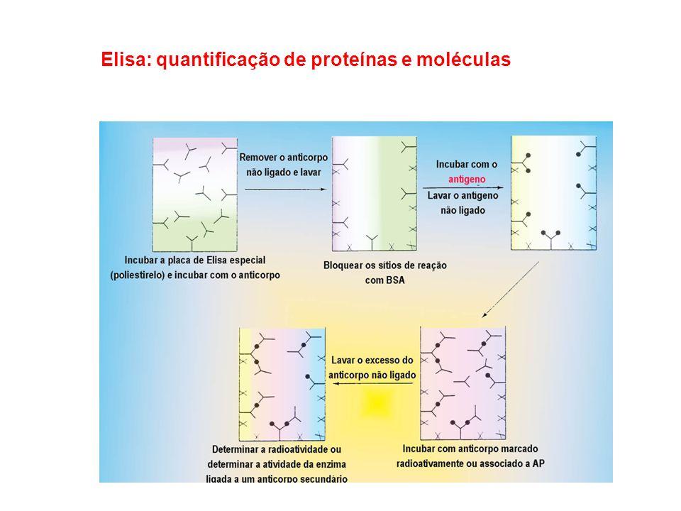 Elisa: quantificação de proteínas e moléculas