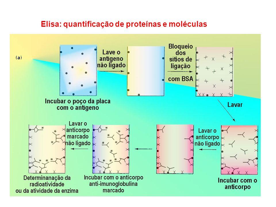 Sistema Duplo-Híbrido de Levedura