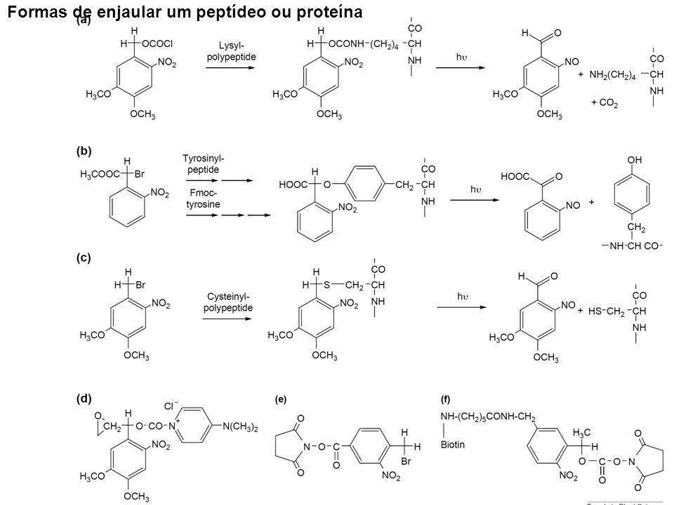 Formas de enjaular um peptídeo ou proteína