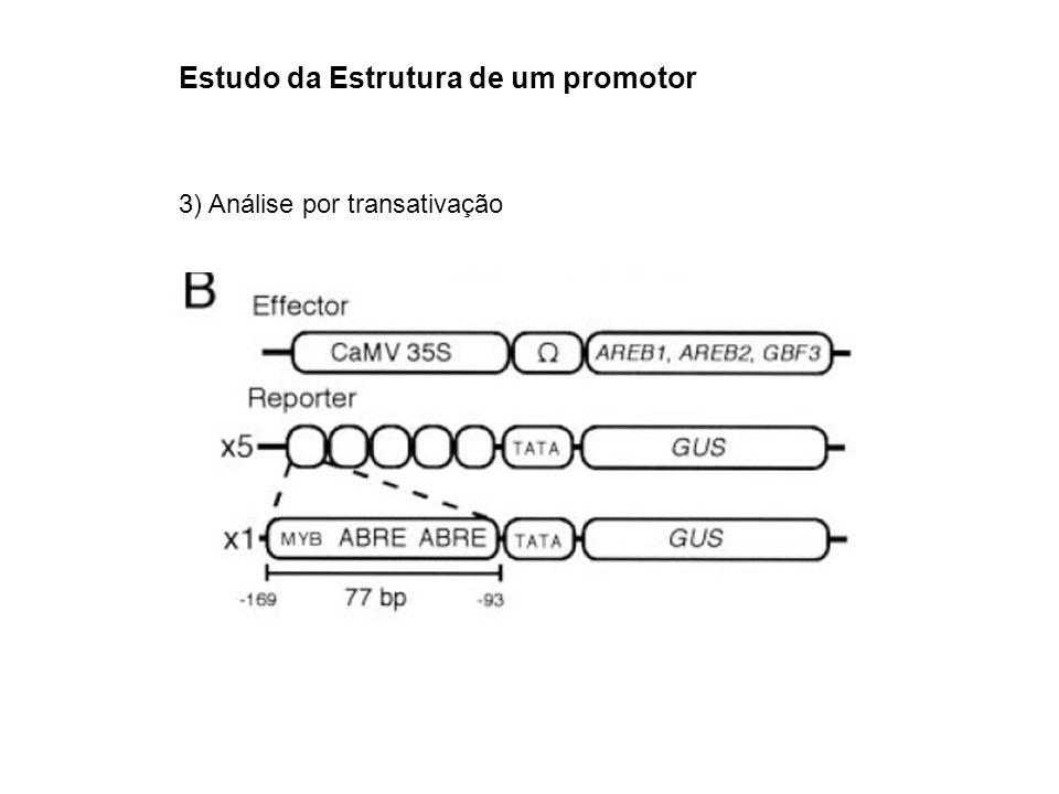 Estudo da Estrutura de um promotor 3) Análise por transativação