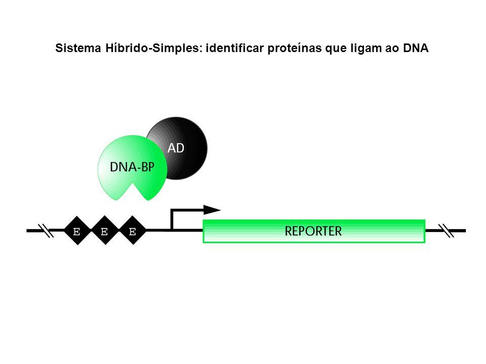 Sistema Híbrido-Simples: identificar proteínas que ligam ao DNA
