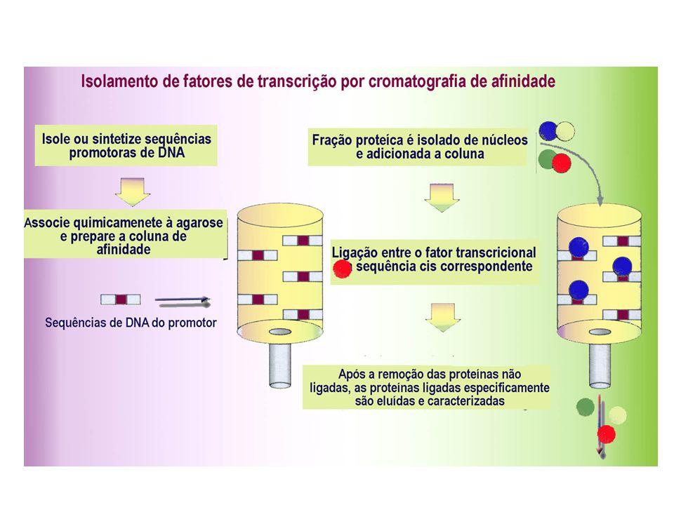 Estudo da expressão diferencial dos genes: Confecção de Bibliotecas de Subtração