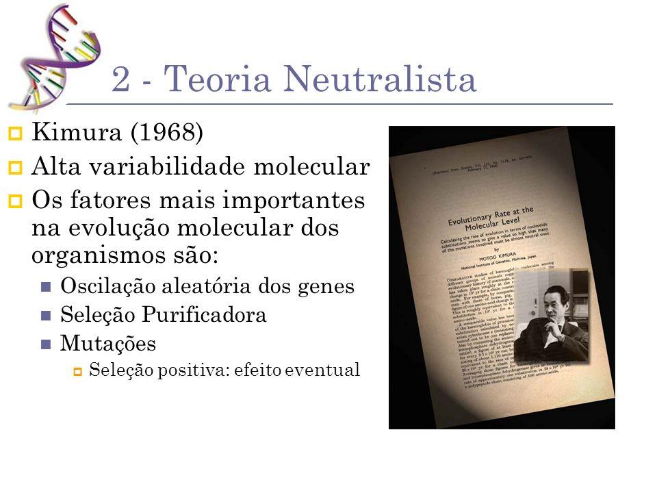 2 - Teoria Neutralista Kimura (1968) Alta variabilidade molecular Os fatores mais importantes na evolução molecular dos organismos são: Oscilação alea