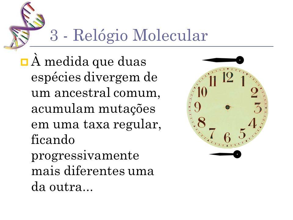 3 - Relógio Molecular À medida que duas espécies divergem de um ancestral comum, acumulam mutações em uma taxa regular, ficando progressivamente mais