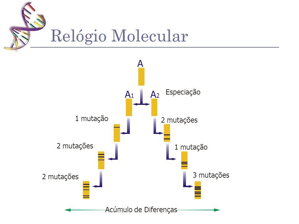 Relógio Molecular Acúmulo de Diferenças A A2A2 A1A1