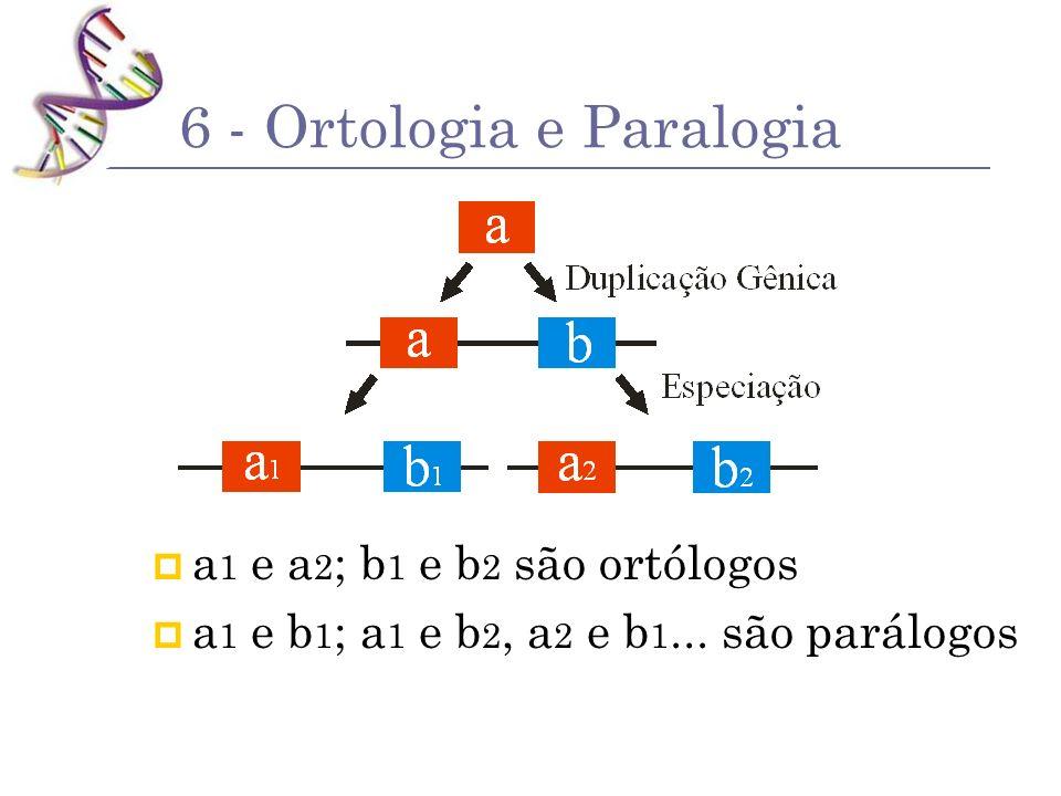 6 - Ortologia e Paralogia a 1 e a 2 ; b 1 e b 2 são ortólogos a 1 e b 1 ; a 1 e b 2, a 2 e b 1... são parálogos