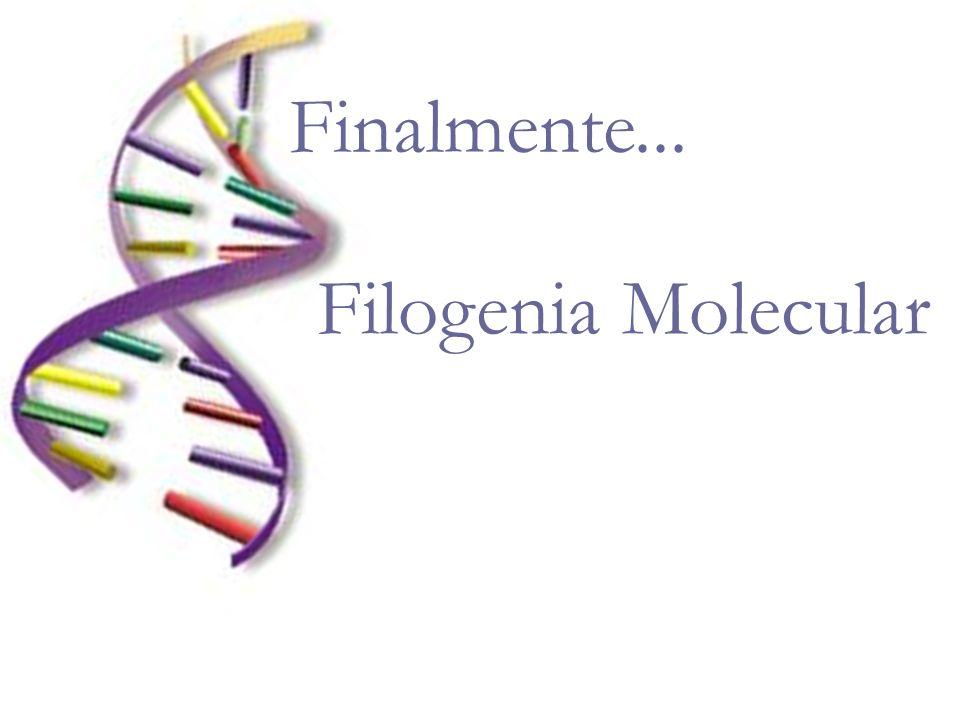Finalmente... Filogenia Molecular