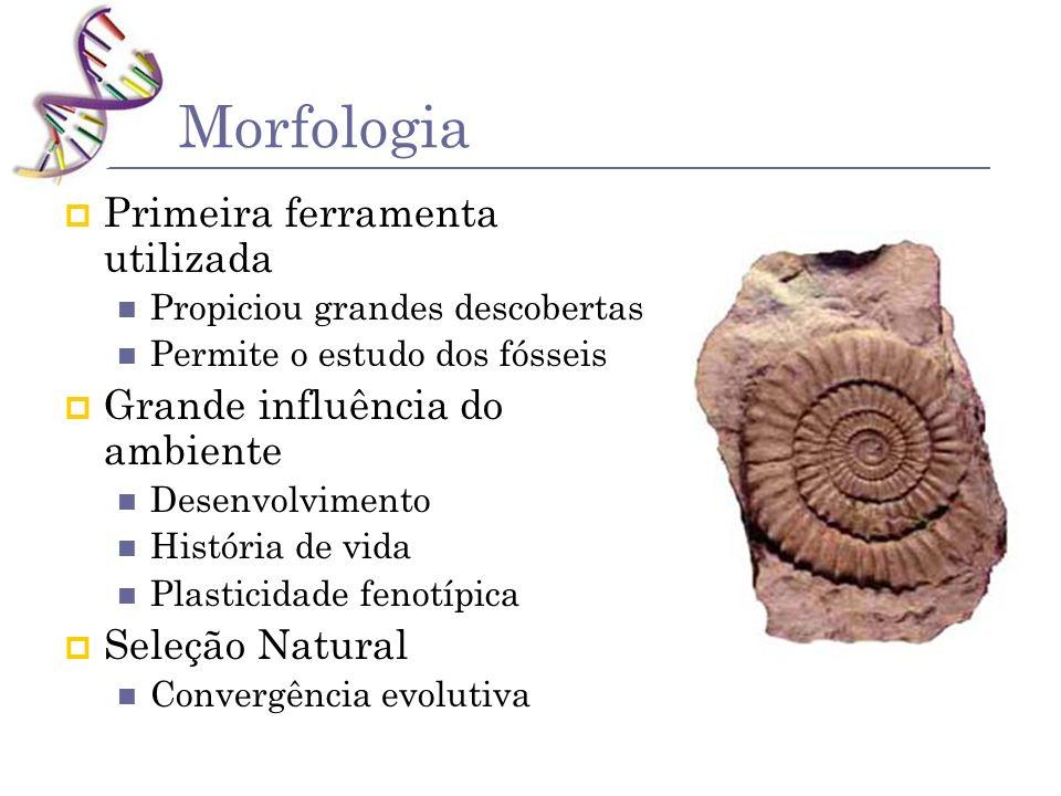 Morfologia Primeira ferramenta utilizada Propiciou grandes descobertas Permite o estudo dos fósseis Grande influência do ambiente Desenvolvimento Hist
