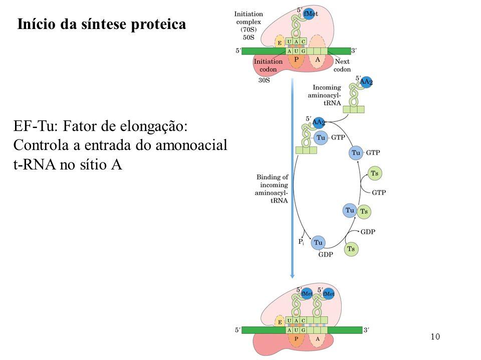10 Início da síntese proteica EF-Tu: Fator de elongação: Controla a entrada do amonoacial t-RNA no sítio A