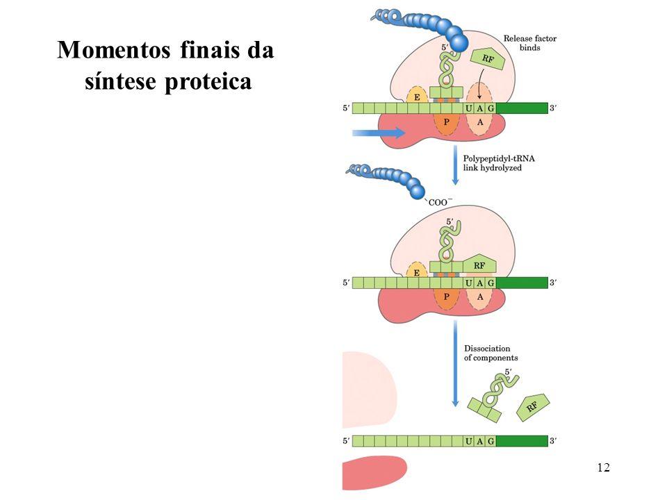 12 Momentos finais da síntese proteica