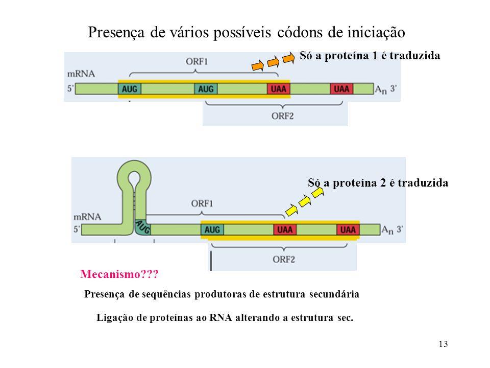 13 Mecanismo??? Presença de sequências produtoras de estrutura secundária Ligação de proteínas ao RNA alterando a estrutura sec. Só a proteína 2 é tra