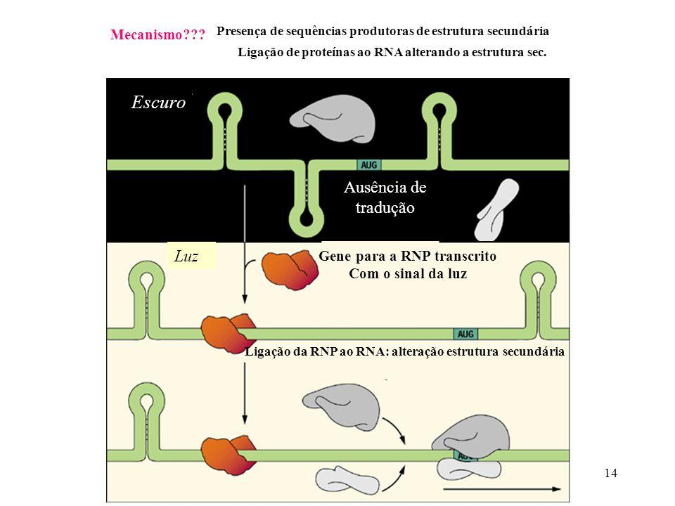 14 Mecanismo??? Presença de sequências produtoras de estrutura secundária Ligação de proteínas ao RNA alterando a estrutura sec. Ausência de tradução