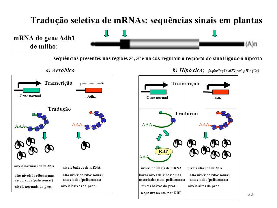 22 Tradução seletiva de mRNAs: sequências sinais em plantas mRNA do gene Adh1 de milho: sequências presentes nas regiões 5, 3 e na cds regulam a respo