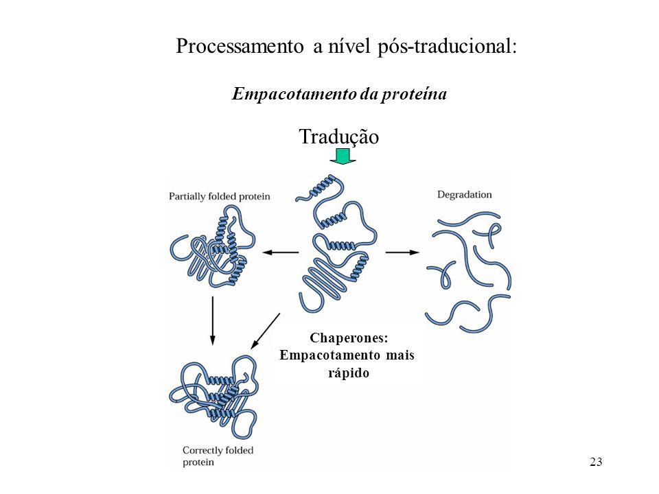 23 Processamento a nível pós-traducional: Empacotamento da proteína Tradução Chaperones: Empacotamento mais rápido