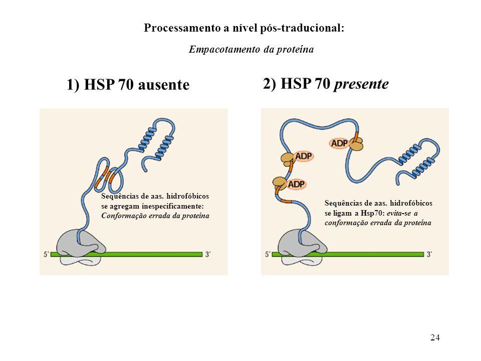 24 1) HSP 70 ausente 2) HSP 70 presente Sequências de aas. hidrofóbicos se agregam inespecificamente: Conformação errada da proteína Sequências de aas