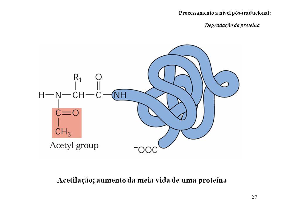 27 Processamento a nível pós-traducional: Degradação da proteína Acetilação; aumento da meia vida de uma proteína