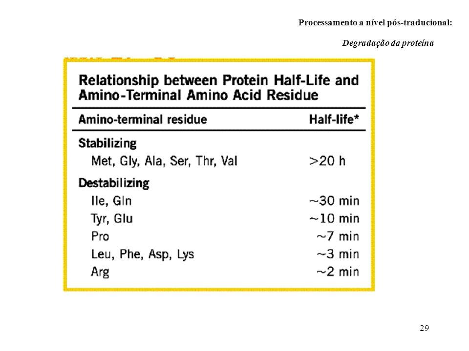 29 Processamento a nível pós-traducional: Degradação da proteína