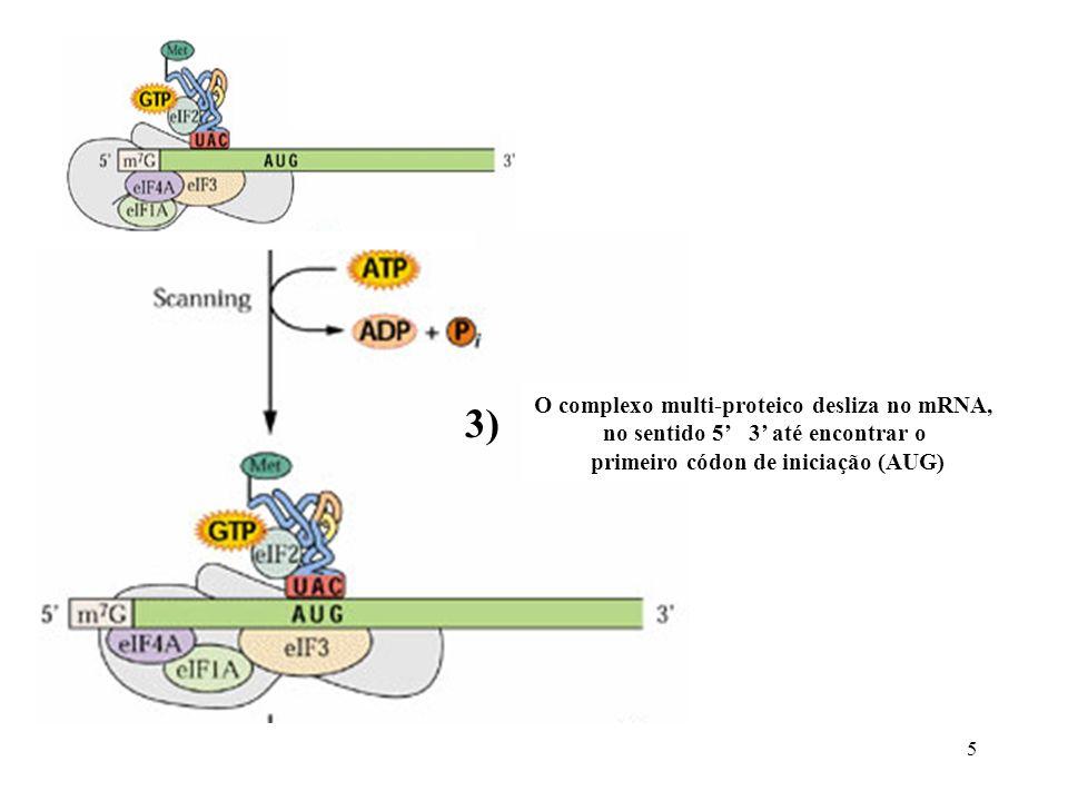 5 O complexo multi-proteico desliza no mRNA, no sentido 5 3 até encontrar o primeiro códon de iniciação (AUG) 3)