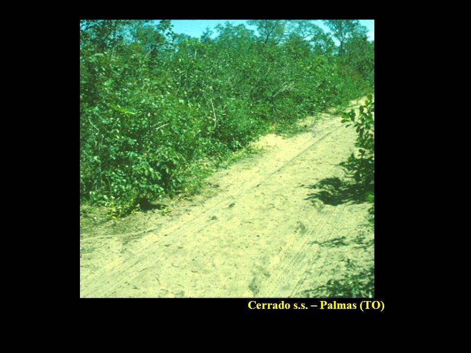 Cerrado s.s. – Palmas (TO)