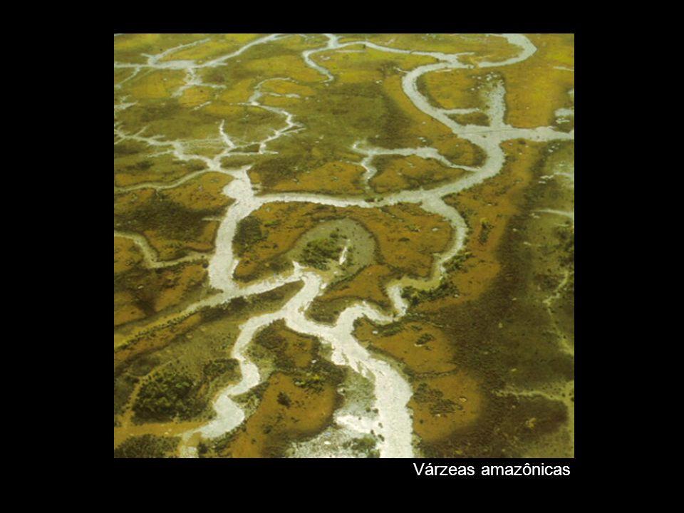 Várzeas amazônicas