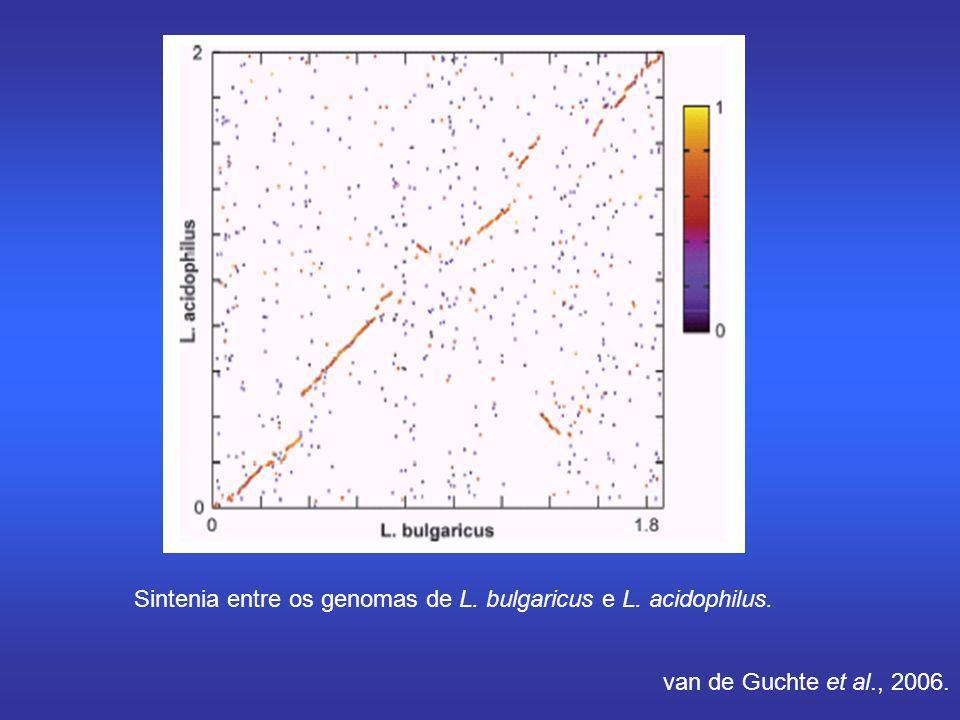 Sintenia entre os genomas de L. bulgaricus e L. acidophilus. van de Guchte et al., 2006.