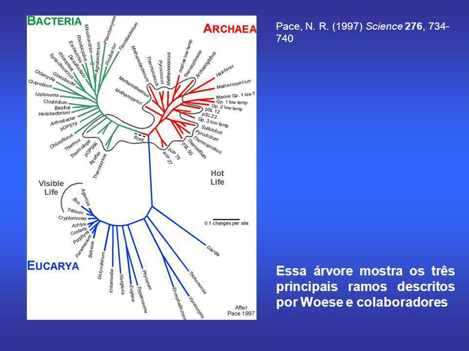 Pace, N. R. (1997) Science 276, 734- 740 Essa árvore mostra os três principais ramos descritos por Woese e colaboradores