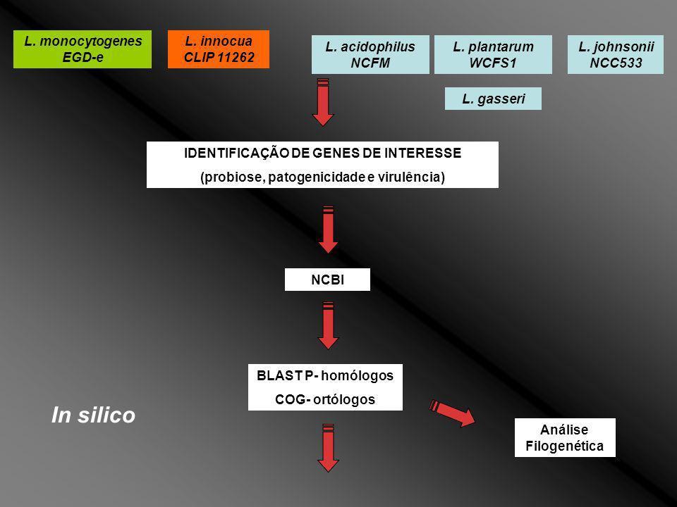 L. monocytogenes EGD-e L. innocua CLIP 11262 L. acidophilus NCFM L. plantarum WCFS1 L. johnsonii NCC533 L. gasseri IDENTIFICAÇÃO DE GENES DE INTERESSE