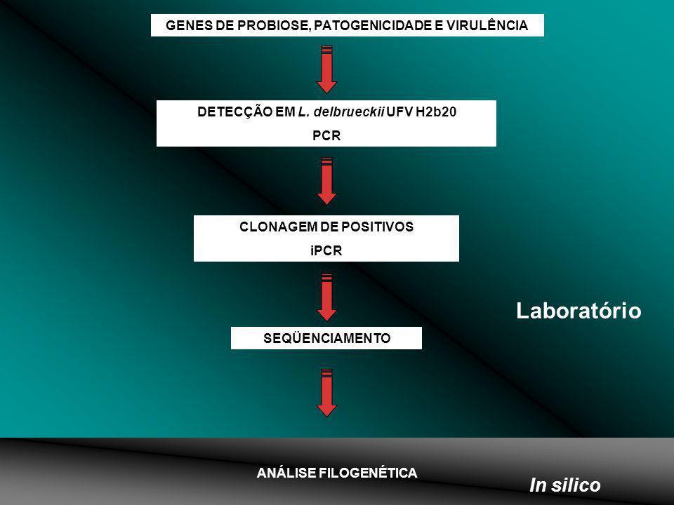 GENES DE PROBIOSE, PATOGENICIDADE E VIRULÊNCIA DETECÇÃO EM L. delbrueckii UFV H2b20 PCR CLONAGEM DE POSITIVOS iPCR SEQÜENCIAMENTO ANÁLISE FILOGENÉTICA