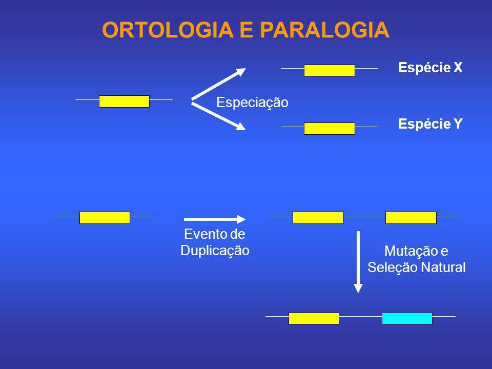 ORTOLOGIA E PARALOGIA Especiação Espécie X Espécie Y Evento de Duplicação Mutação e Seleção Natural