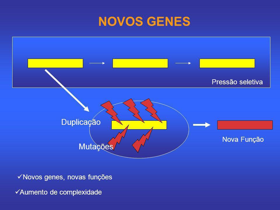 NOVOS GENES Pressão seletiva Nova Função Duplicação Mutações Novos genes, novas funções Aumento de complexidade