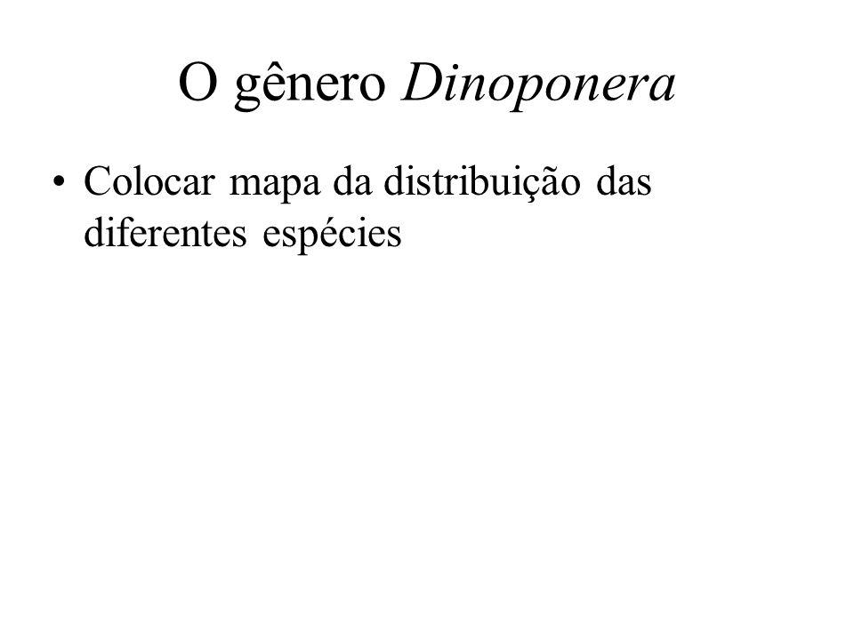 O gênero Dinoponera Colocar mapa da distribuição das diferentes espécies