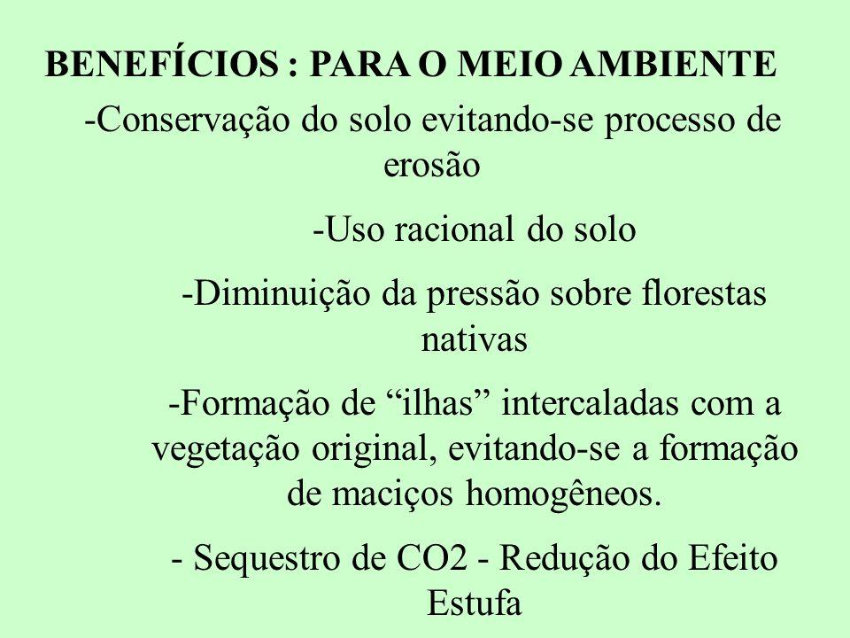 BENEFÍCIOS : PARA O MEIO AMBIENTE -Conservação do solo evitando-se processo de erosão -Uso racional do solo -Diminuição da pressão sobre florestas nativas -Formação de ilhas intercaladas com a vegetação original, evitando-se a formação de maciços homogêneos.