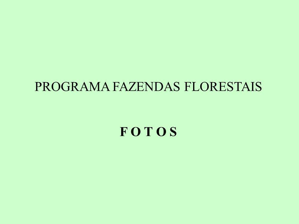 PROGRAMA FAZENDAS FLORESTAIS F O T O S