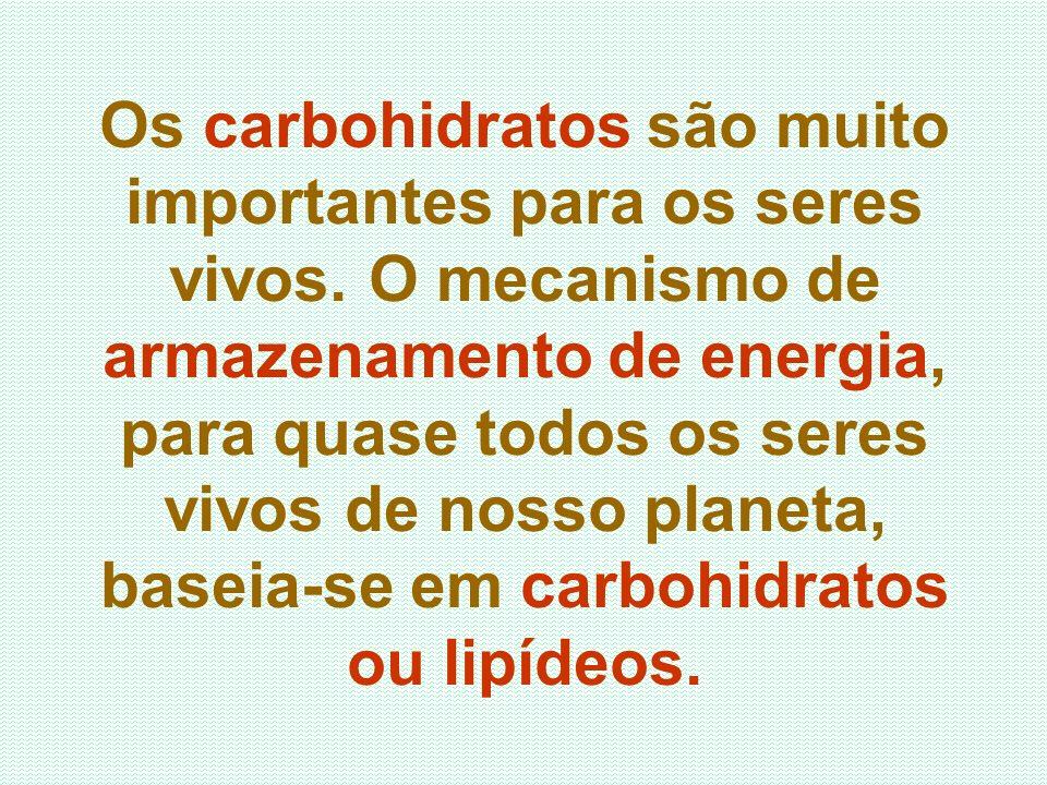 Os carbohidratos são muito importantes para os seres vivos. O mecanismo de armazenamento de energia, para quase todos os seres vivos de nosso planeta,