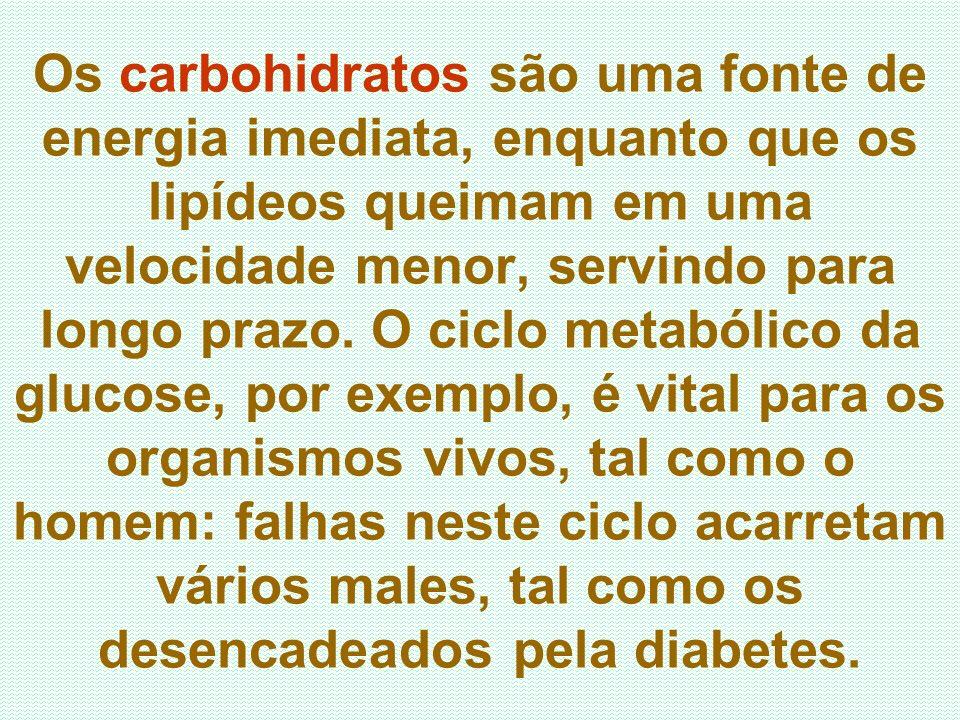 Os carbohidratos são uma fonte de energia imediata, enquanto que os lipídeos queimam em uma velocidade menor, servindo para longo prazo. O ciclo metab