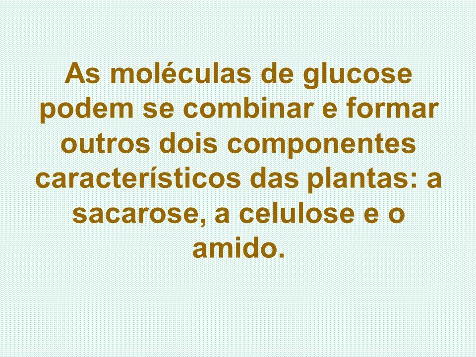 As moléculas de glucose podem se combinar e formar outros dois componentes característicos das plantas: a sacarose, a celulose e o amido.