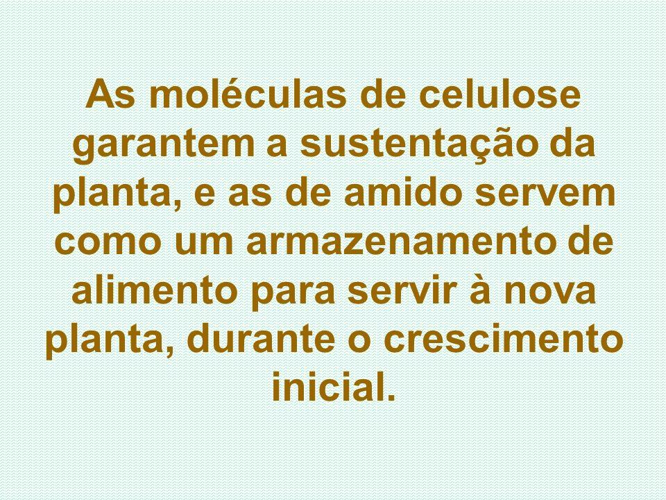 As moléculas de celulose garantem a sustentação da planta, e as de amido servem como um armazenamento de alimento para servir à nova planta, durante o